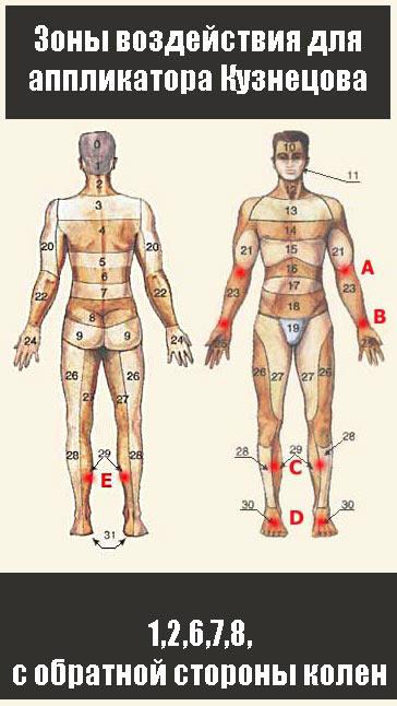 Применяйте аппликатор на следующих биологически активных зонах: 1,2,6,7,8, обработайте зону под коленями.