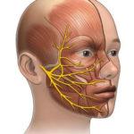 Тройничный нерв проходит по всей области лица охватывая зону глаз, верхней и нижней челюсти.