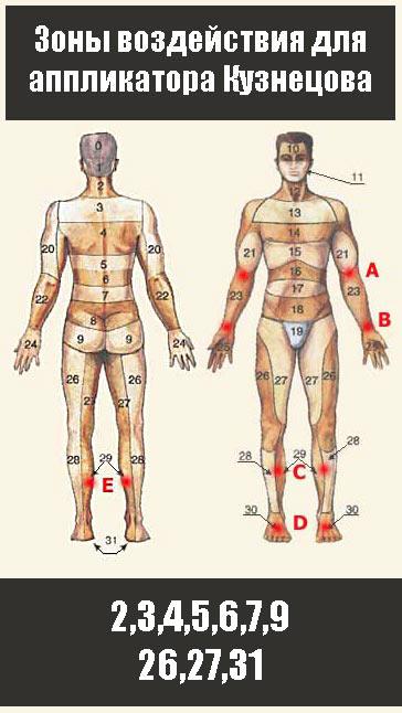 Аппликатор Кузнецова для похудения бедер и живота за 21 день - зоны обработки 2,3,4,5,6,7,9,26,27,31